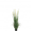 Potted pampas grass, height 130cm, green